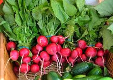 organic vegan radishes